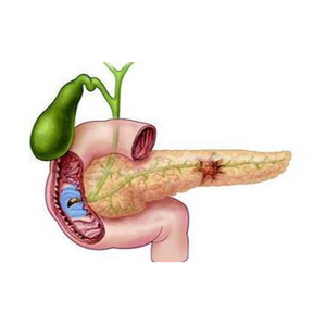 Pancreas Items